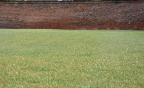 Finely manicured grass and old brick wall