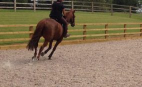 Horse and rider cantering inside outdoor riding arena