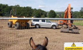 Horse looking through fence at equine arena construction